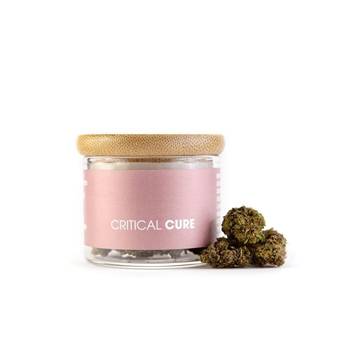 Prodotto Critical Cure 1 gr